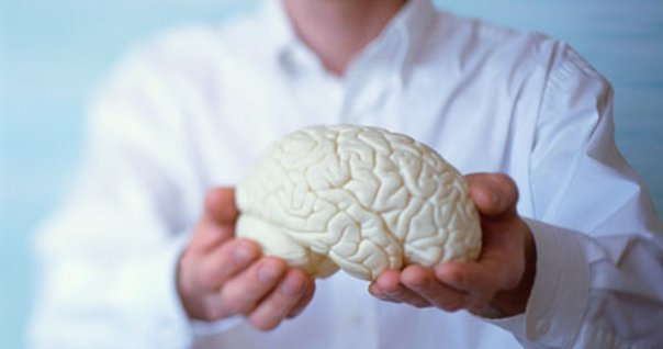Hands Holding Model of a Brain
