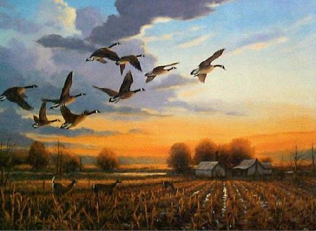 Geese Flying to Sunset