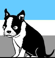 Blinky the Boston Terrier
